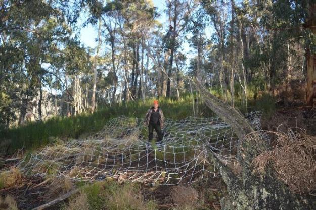 Sambar deer netting