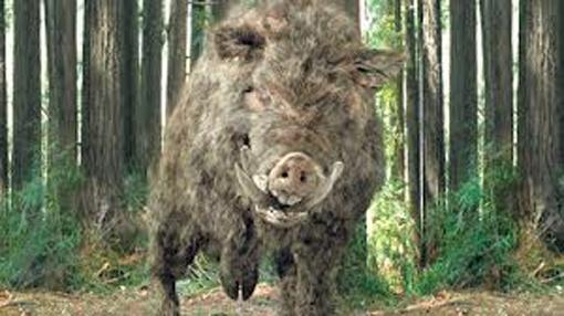 PigHuntPig