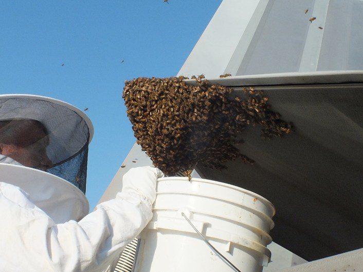192nd Fighter Wing Aircraft Maintainers found a swarm of honey bees hanging from the exhaust nozzle of an F-22 Raptor engine on June 11, 2016 at Joint Base Langley-Eustis, Virginia. Andy Westrich, U.S. Navy retired and local honey bee keeper, was called to remove and relocate the bees to a safe place for them to build their hive. (U.S. Air Force courtesy photo)