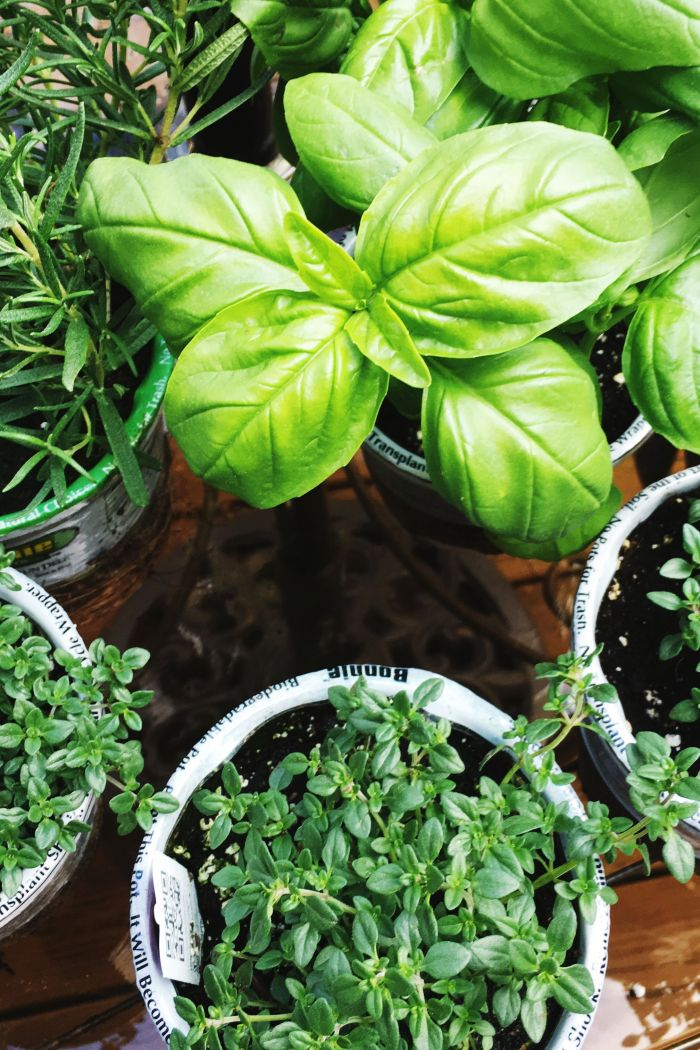 Planting Your Herb Garden for Spring