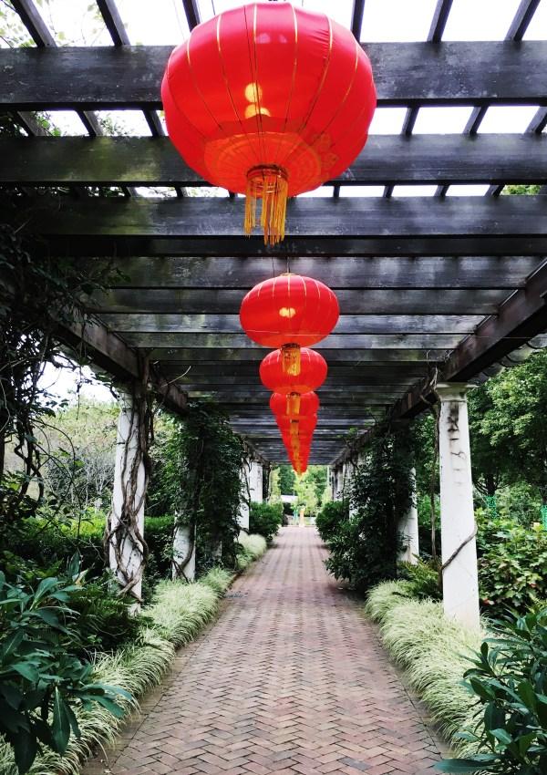 Chinese Lanterns at Daniel Stowe Gardens