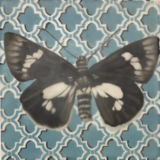 Butterfly-I-8x8-425