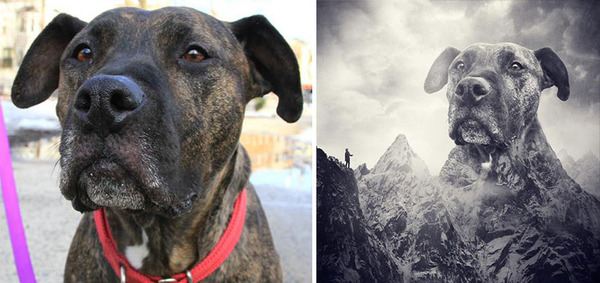 Surreal Pictures With Shelter Dogs
