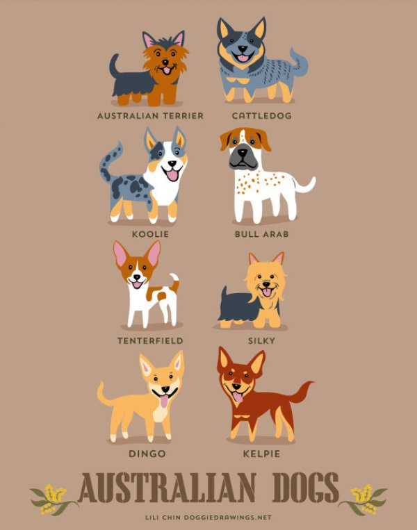 information about dogs - australian  dogs