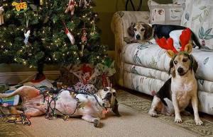 animals who ruined christmas