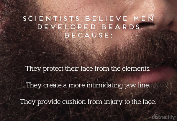 facts about beards 3