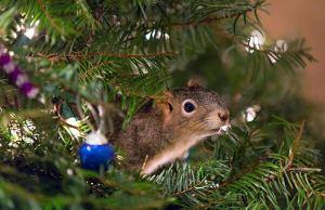 rescued squirrel 1