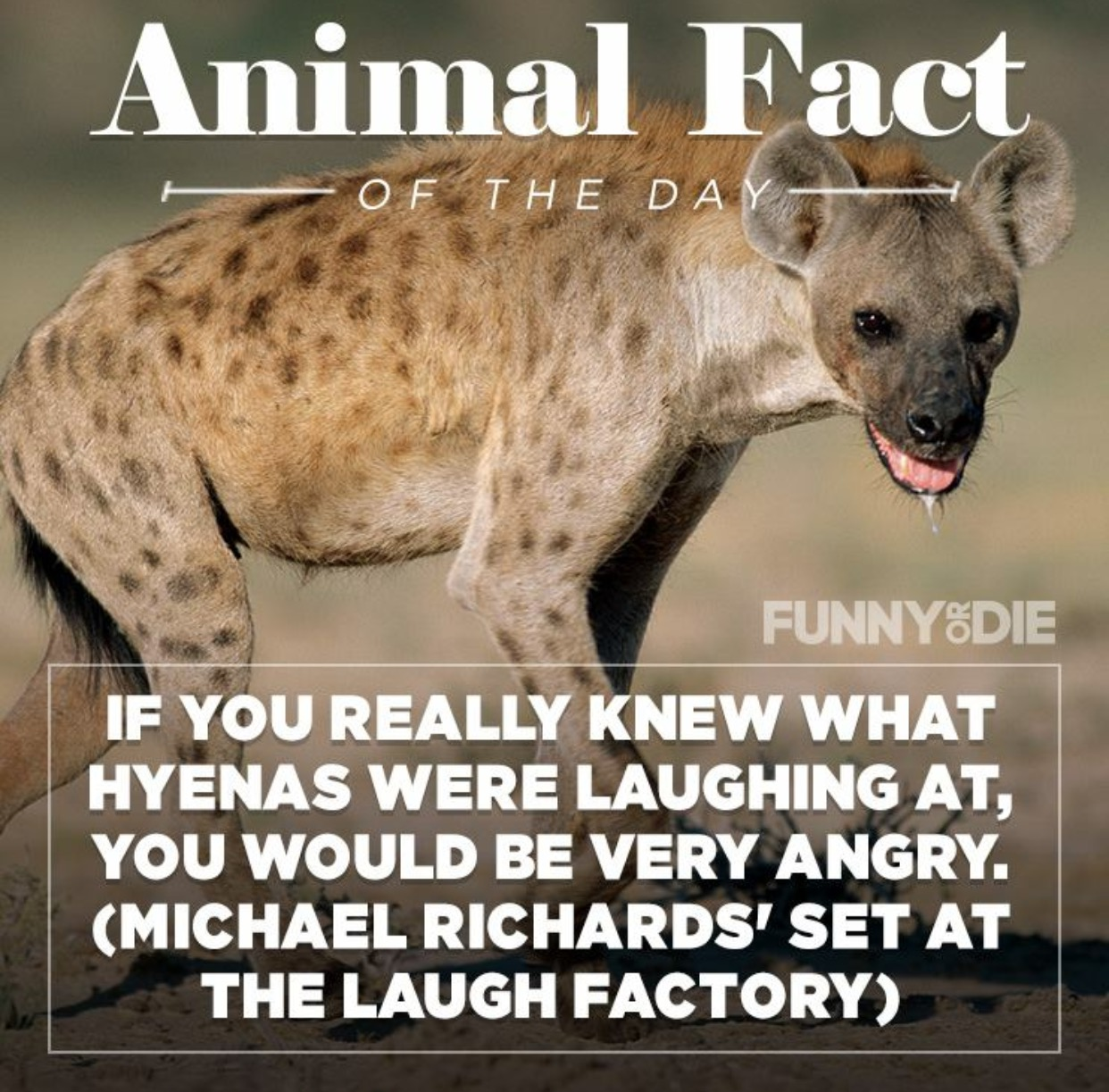 25 Funny Animal Facts That Might Make You Pee A Little