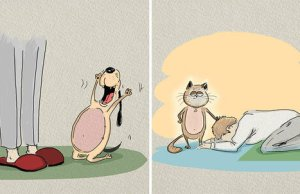 Differences Between Cats And Dogs 7