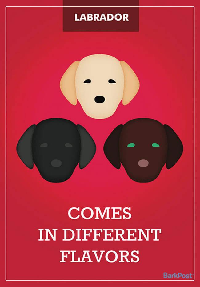 Honest Dog Stereotypes Slogans 12