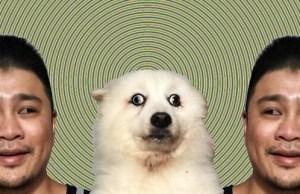 Confused dog meme 7