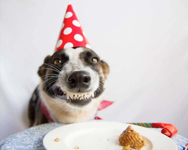 Animal Birthday Dog Funny Happy