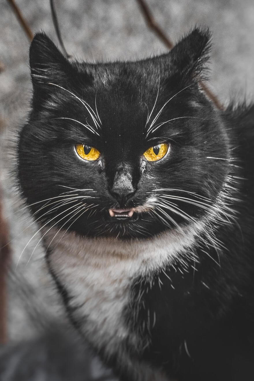 Gabrielius Khiterer Takes Beautiful Pictures Of Stray Cats To Show Their Different Beauty To The