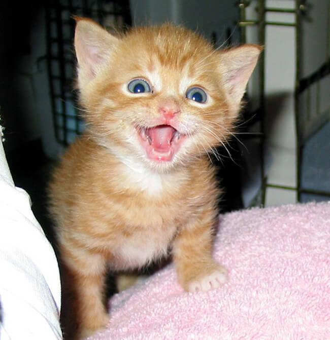 smiling cat 11