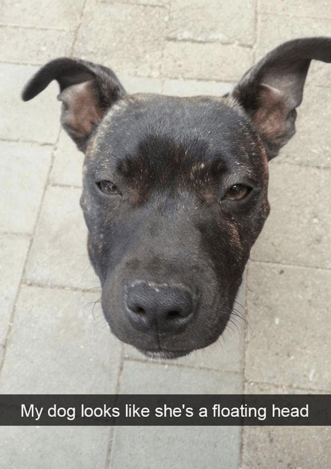 374 Dog Memes Beware Cuteness Overload