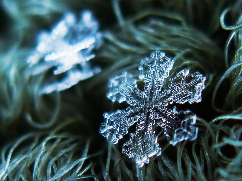 Snöflinga. Foto: Alexey Kljatov
