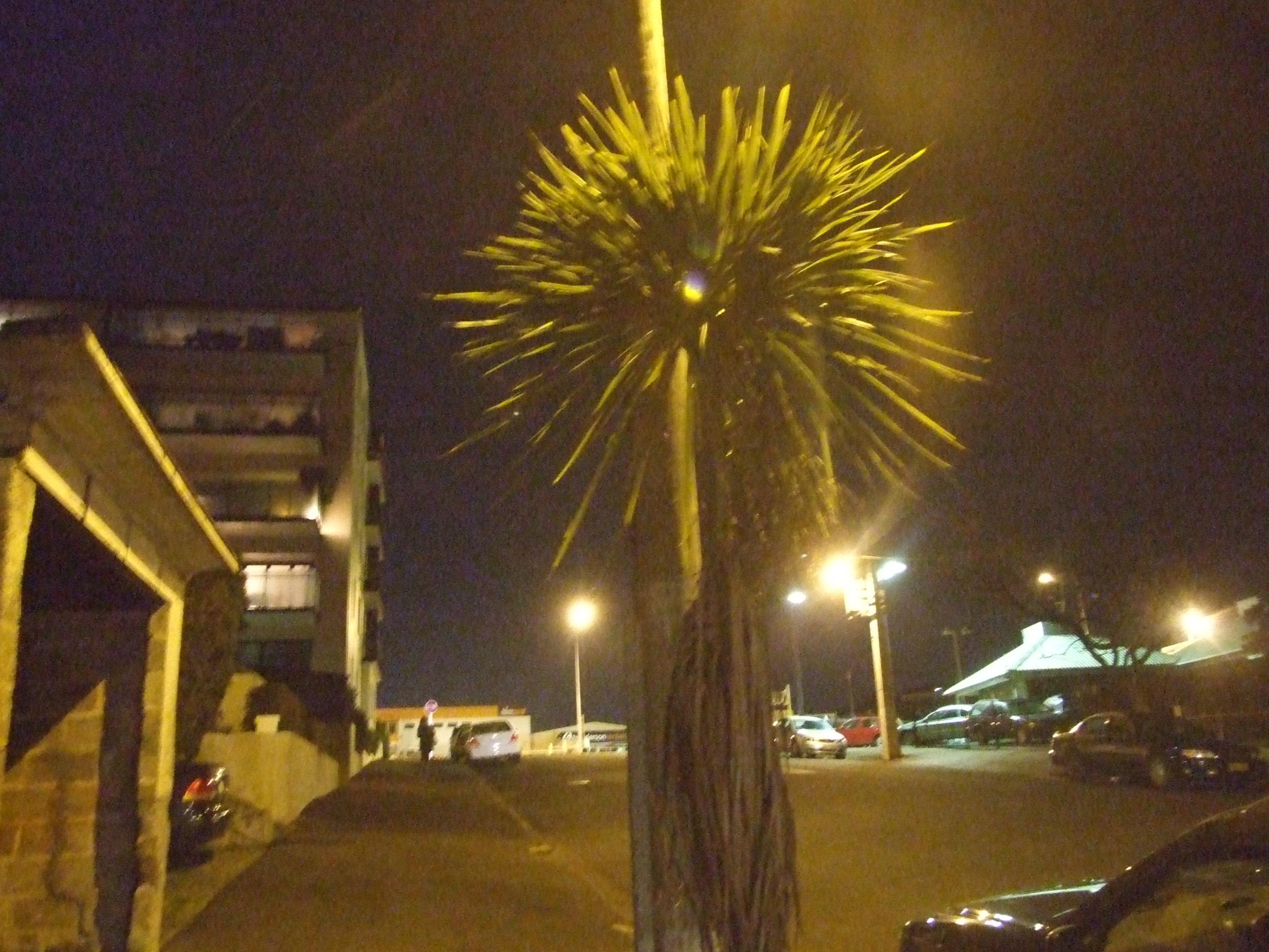 Ariki Street, Auckland
