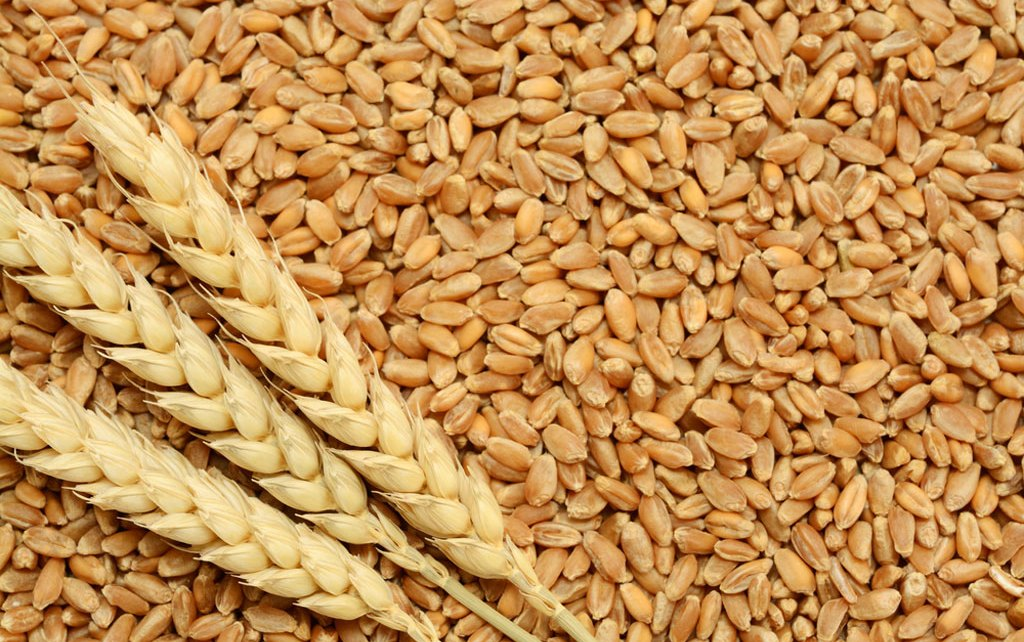 import of wheat
