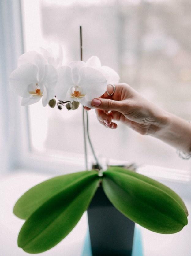 Белый цветок - баланс и гармония