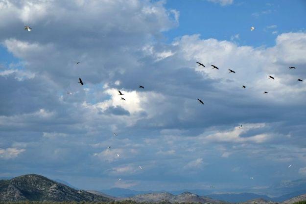 skodar-lake-birds