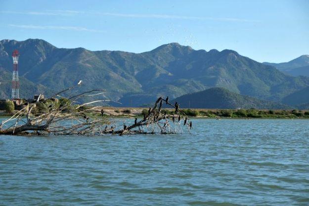skodar-lake-birds4