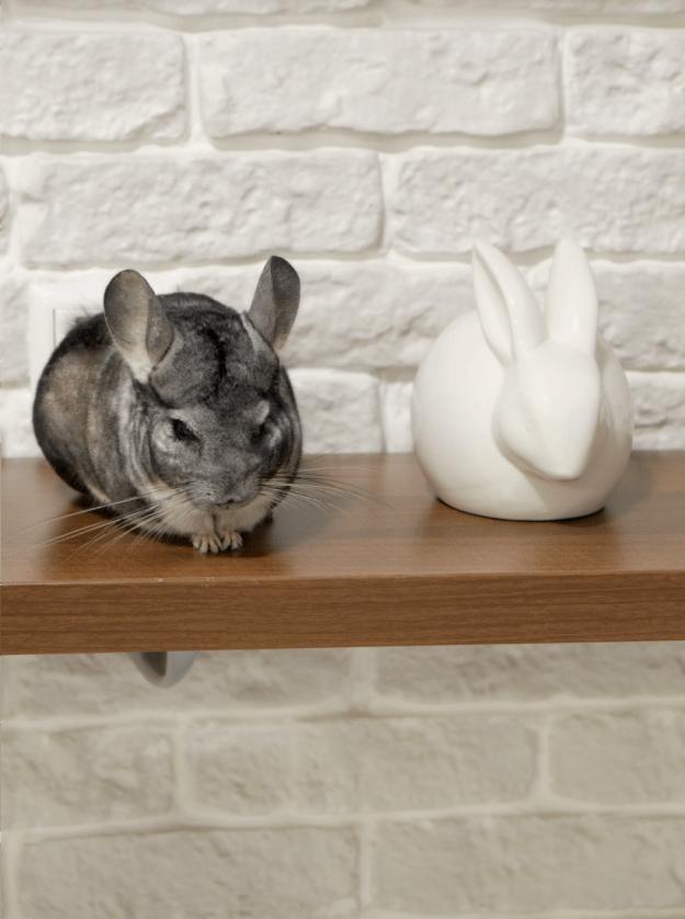 Ibyibkkf и бклый керамический заяц - фото