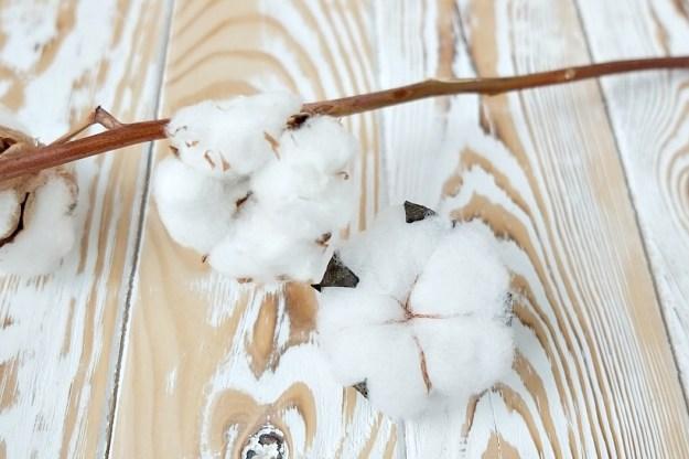 cotton-flowers-comparison