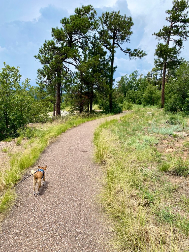 A view of the paved  Rim Lakes Vista trail and our dog