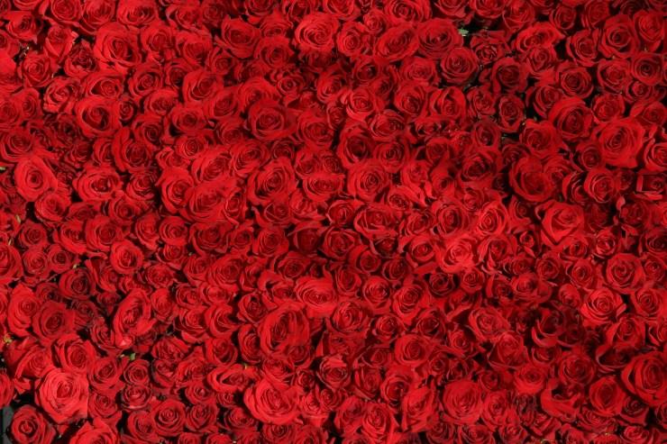 arranged-flowers-love-54320