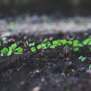 What if we looked at life as growth and change?