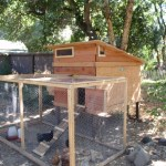 Chicken Coops — The Top 5 Requirements