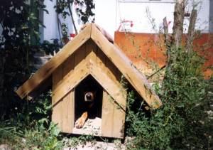 dog shelter from sun in backyardyard