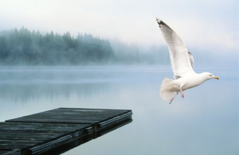 Pocono Chief White Eagle Quote. Gull Flying into Fog