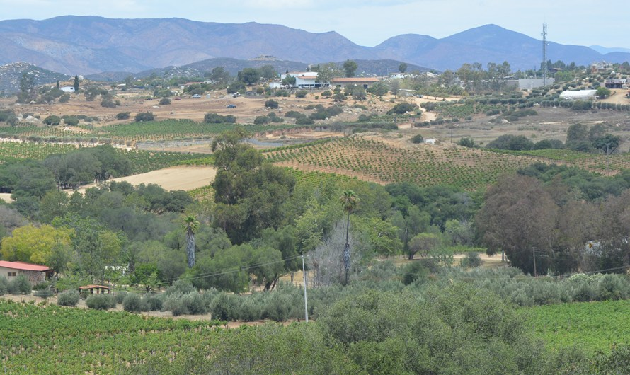 Guadalupe valley vineyards reopening: Seventeen tourist servers restart operations within COVID19 regulations