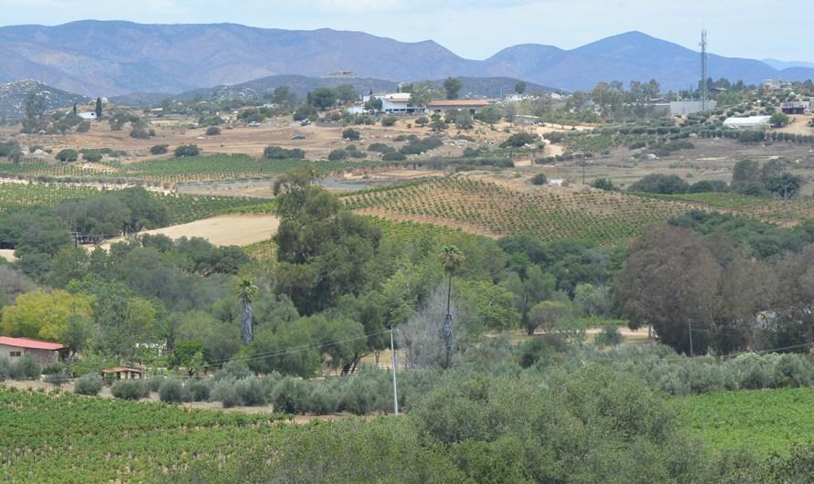 Valle de Guadalupe inicia el regreso a las actividades con re-apertura de casi 20 vitivinícolas