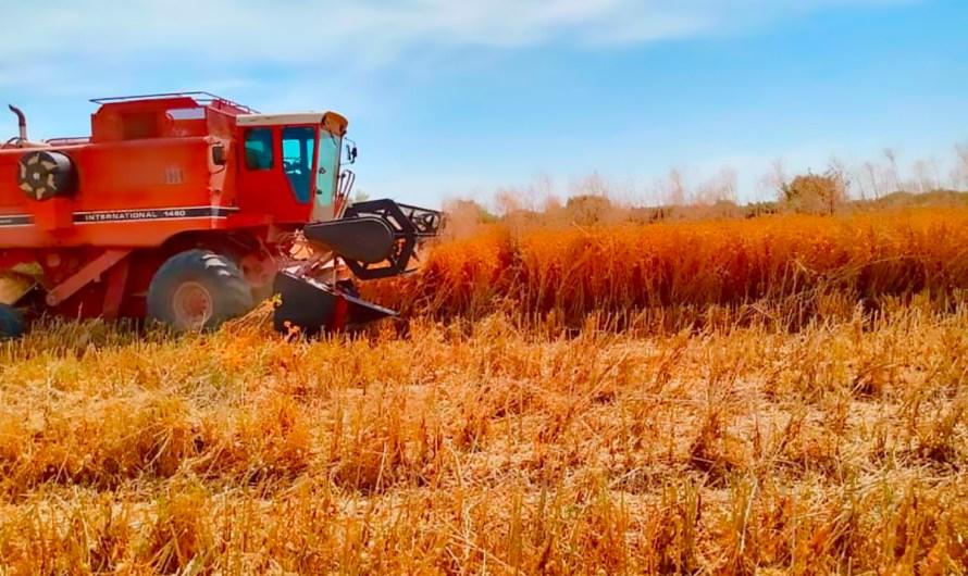 Lenta e insuficiente la reconversión de cultivos en el Valle de Mexicali