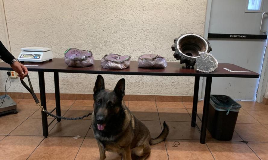 Descubre 9.5 kilos de metanfetamina elemento K9 de la Guardia Estatal en empresa de paquetería en Nuevo Mexicali