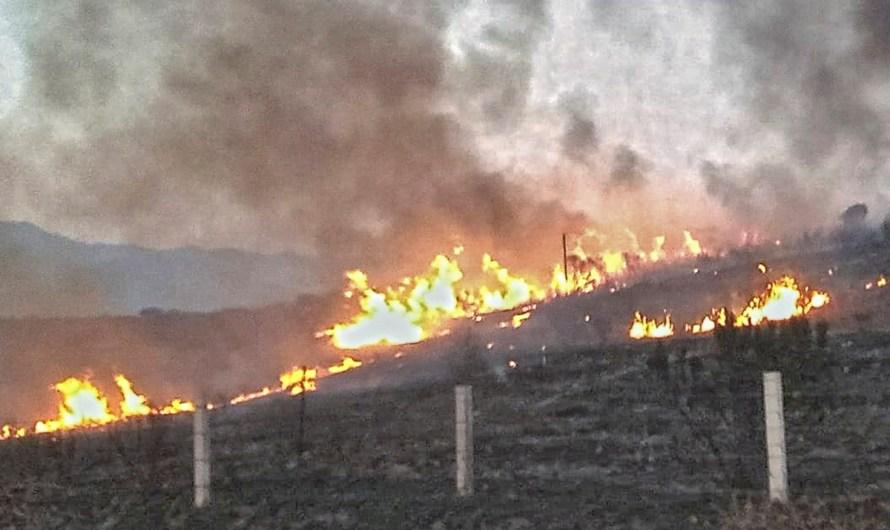 Sin daños mayores por el incendio forestal que quemó 8 mil hectáreas en el area de Santo Tomás, Ensenada