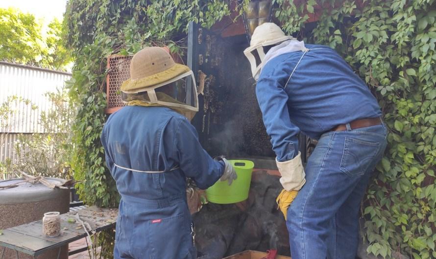 Inicia Instituto de Ciencias Agrícolas-UABC proyecto de investigación de apicultura y su efecto en ecosistemas