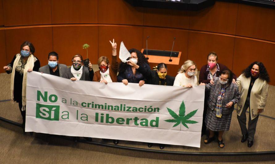 Aprueba Senado uso lúdico de la marihuana, explotan las redes sociales a favor y en contra
