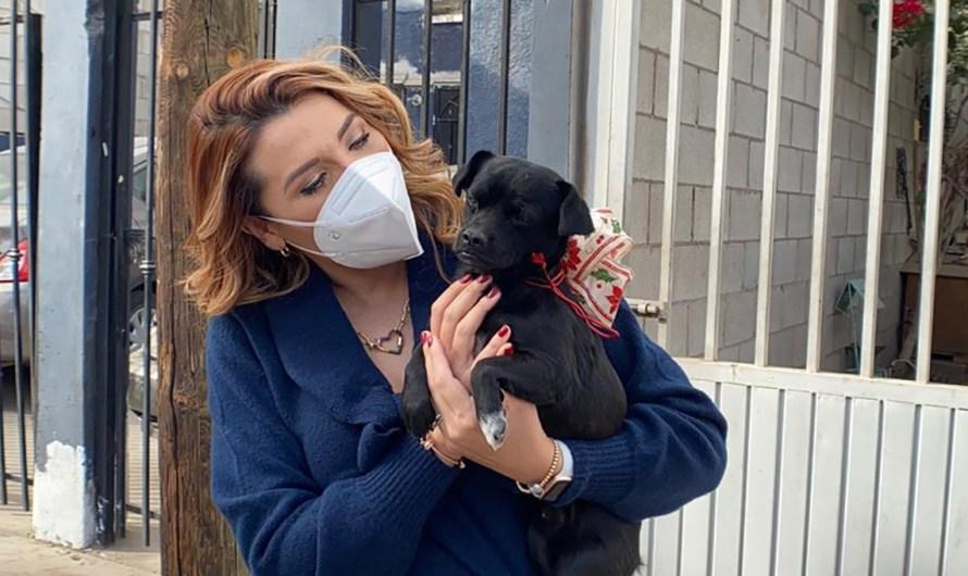 Promueve Ayuntamiento de Mexicali programa «Adoptar es amar» en Centro de Control Animal