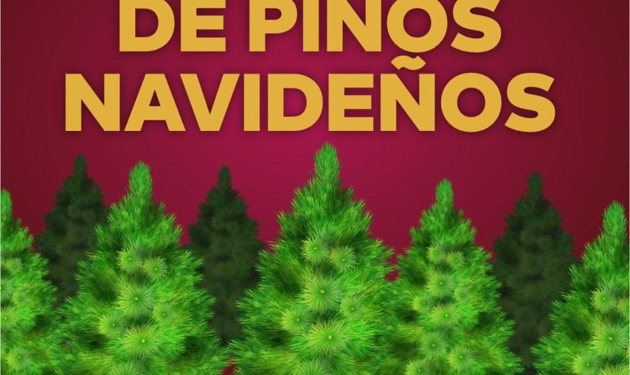 Ayuntamiento de Mexicali instala 13 centros de acopio de arboles navideños para evitar basura y contaminación