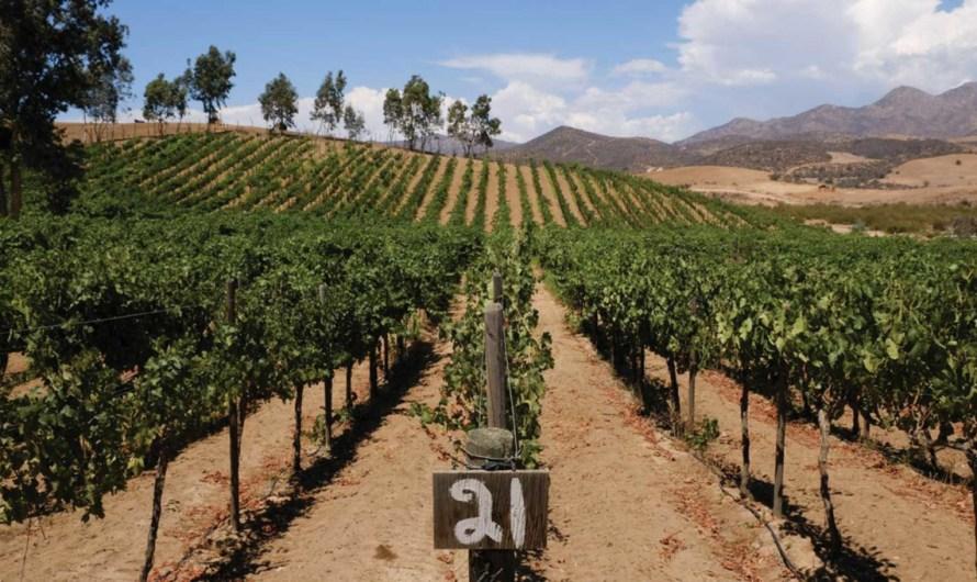 Apoyará la Secretaría del Campo a productores de Vid de Baja California: Hector Haros Encinas