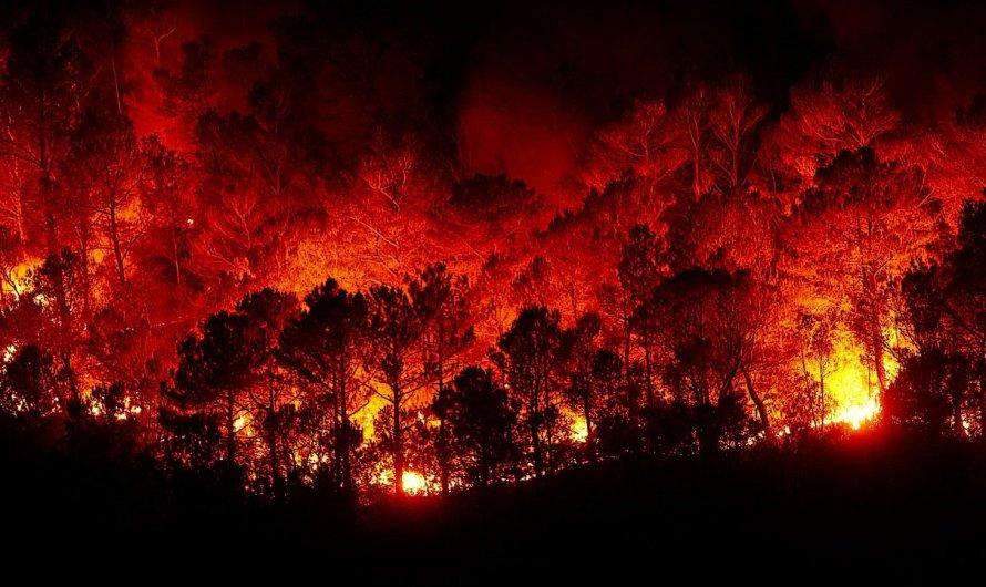 Situación de incendios forestales al 1 de marzo, reporte de la Comisión Nacional Forestal