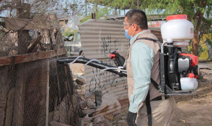 Recomienda Secretaría de Salud tener limpios patios de viviendas para prevenir Ricketssia
