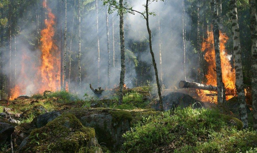 Reporta CONAFOR 6 mil incendios forestales en 2021, solo el 8% corresponde a zonas boscosas con árboles adultos