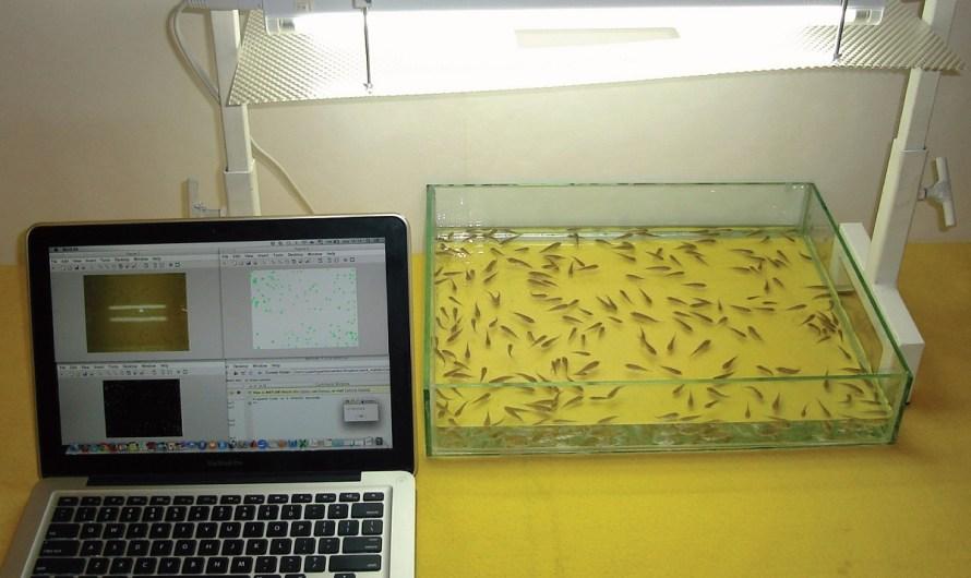 Otorgan nueva patente para contador automático de peces vivos en procesamiento digital, para científicos de la UABC