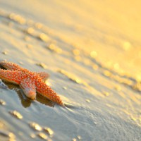 Krill Oil, Clearing Heat, Gut Health and more. Balancing Point 3.22.12
