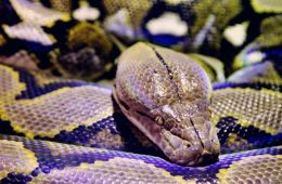 Teenager Victim of 1.5 Meter Snake Attack in Bali