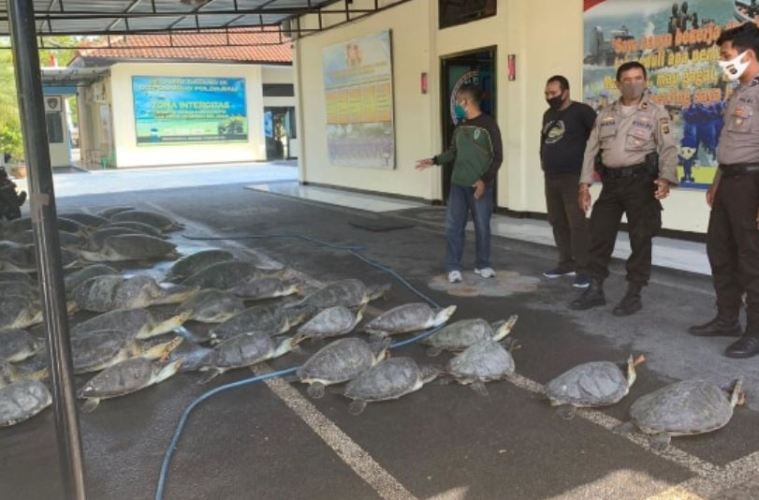 7 People Arrested For Smuggling Over 40 Endangered Turtles in Bali